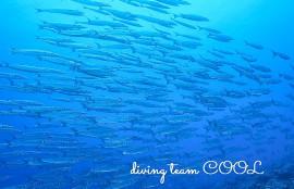 那覇ダイビング ケラマ諸島
