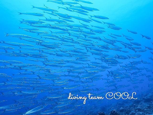 沖縄ダイビング ケラマ諸島