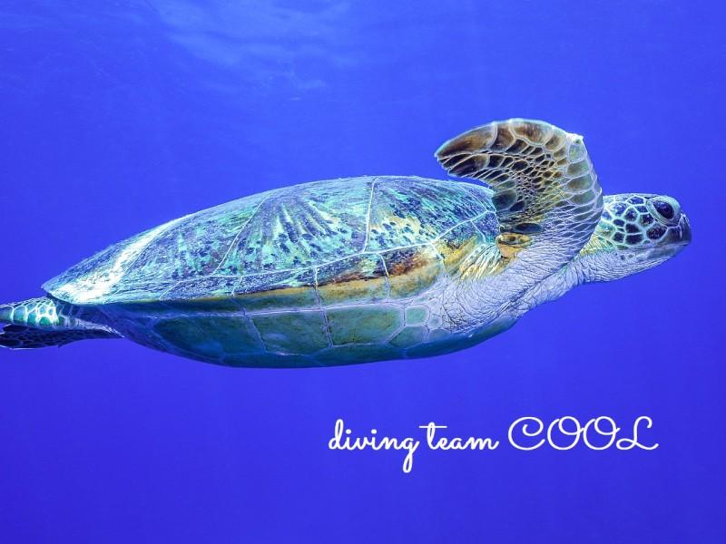 沖縄ダイビング ウミガメ
