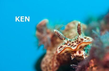 沖縄ウミウシ ミナミニシキウミウシ