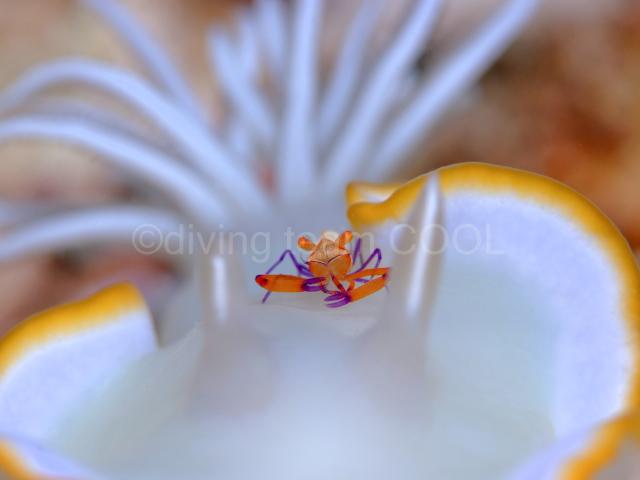 沖縄 ウミウシライダー
