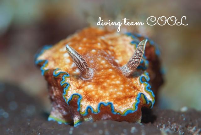 沖縄ダイビング水納島 モンジャウミウシ
