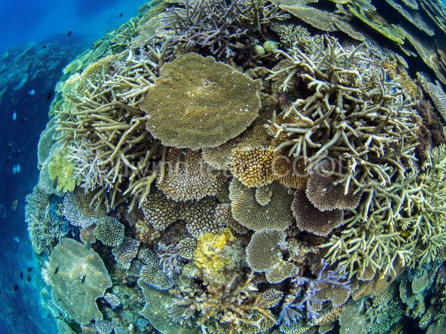 沖縄フォトダイビング サンゴ礁