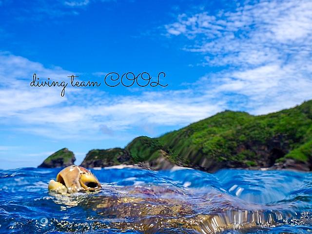 沖縄 ウミガメの息継ぎ