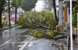 沖縄 台風の爪痕