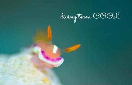 沖縄ダイビング アラリウミウシ
