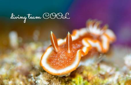 ケラマ体験ダイビング キャラメルウミウシ