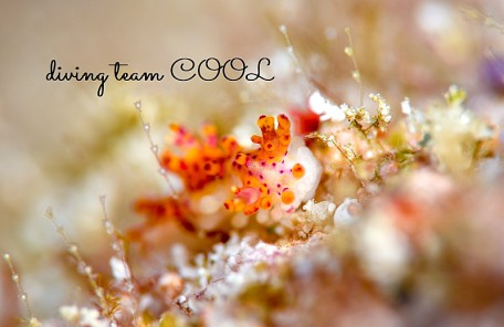 沖縄センヒメウミウシ