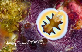 沖縄レッドビーチ シラナミイロウミウシ