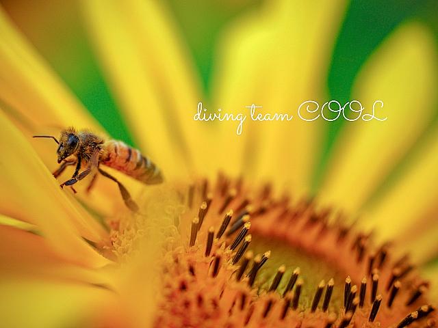 沖縄 蜜蜂