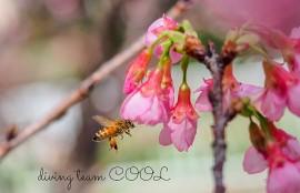 沖縄 ミツバチ