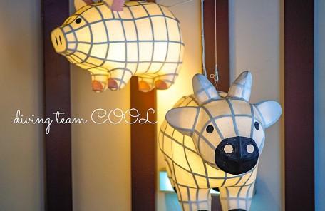 沖縄写真 あぐー豚と石垣牛