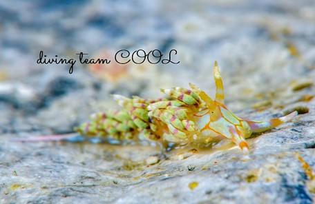 沖縄 トウリンミノウミウシ