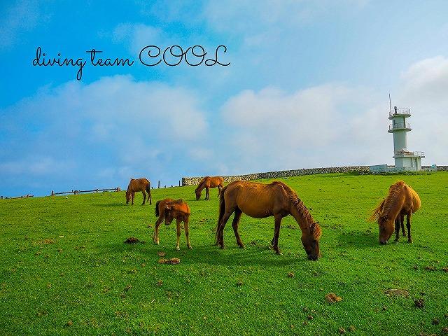 与那国島ツアー 与那国馬