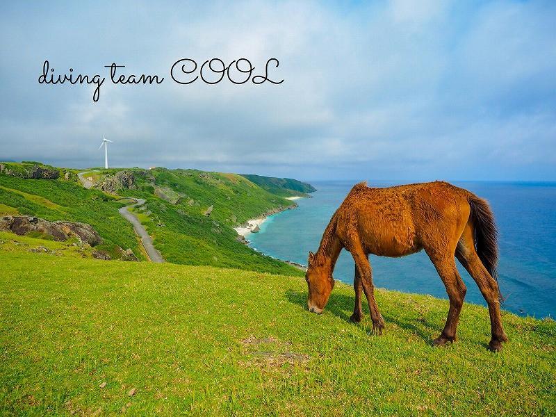 与那国ツアー 与那国馬
