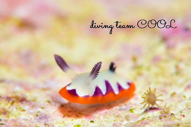 砂辺ビーチダイブ フジナミウミウシ