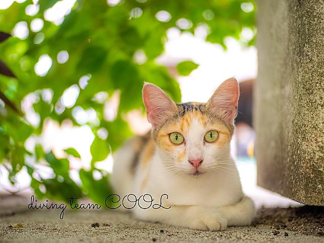 沖縄 ネコ