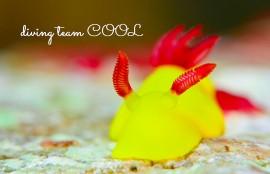沖縄ウミウシダイブ ラボウトウミウシ