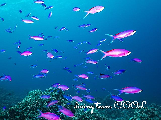 沖縄ダイビング ハナゴイ
