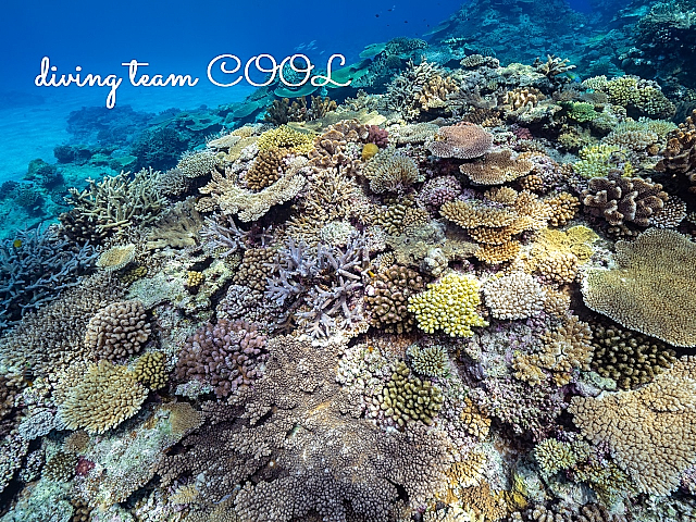 沖縄ダイビング モリモリ珊瑚