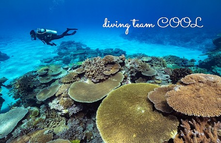 沖縄ダイビング ダイバーとサンゴ