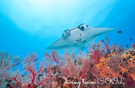 沖縄ダイビング ケラマンタ