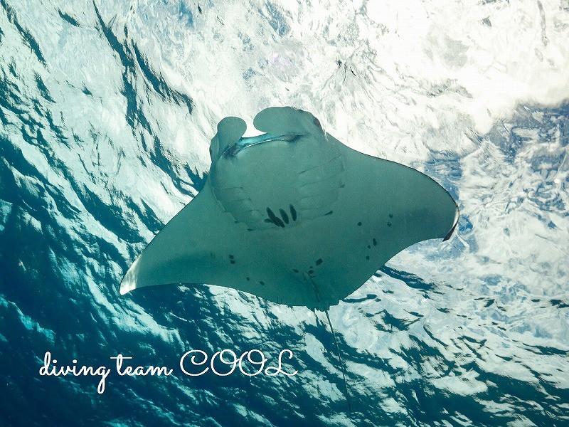 沖縄慶良間諸島ダイビング ケラマンタ