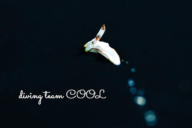 沖縄ダイビング ケラマコネコウミウシ