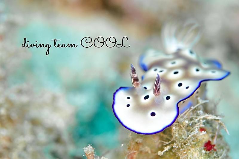 沖縄ダイビング マダライロウミウシ