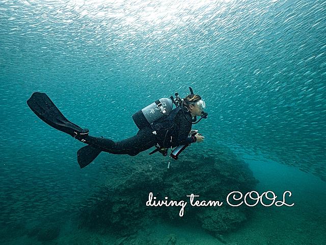沖縄ダイビング ミジュンの群れ