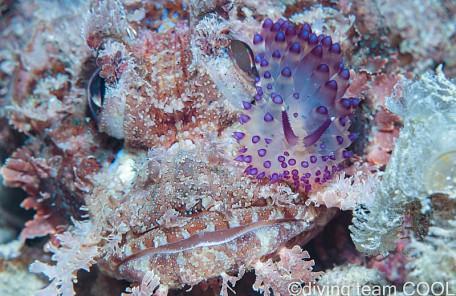 沖縄ダイビング サーシャコヤナギウミウシ