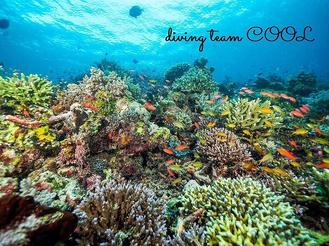 インドネシア デラワン 珊瑚礁