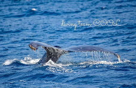 沖縄クール ザトウクジラ