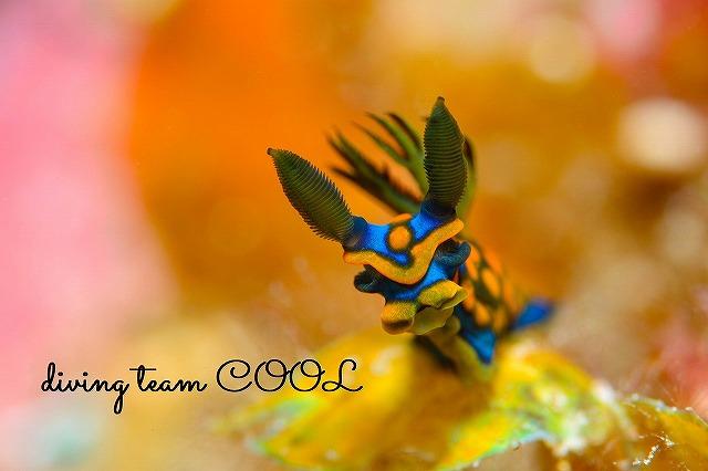 沖縄ウミウシダイブ サガミリュウグウウミウシ