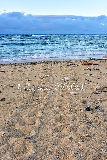 沖縄 ウミガメのキャタピラ跡