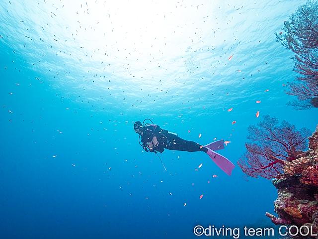 沖縄ダイバー