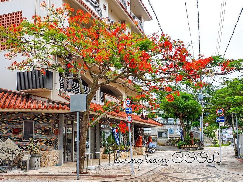 沖縄 ホウオウボク