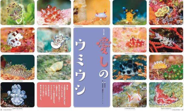沖縄 愛しのウミウシ