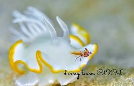 沖縄ウミウシライダー