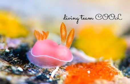 沖縄フジムスメウミウシ