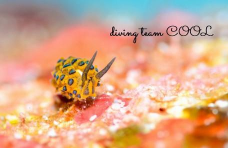 沖縄本島 ウミウシダイビング ミナミアオモウミウシ