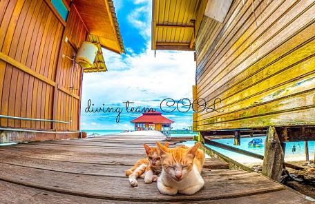 沖縄ダイビングクール 海外ツアー