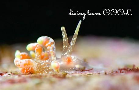 沖縄ウミウシダイビング ハナビラミノウミウシ