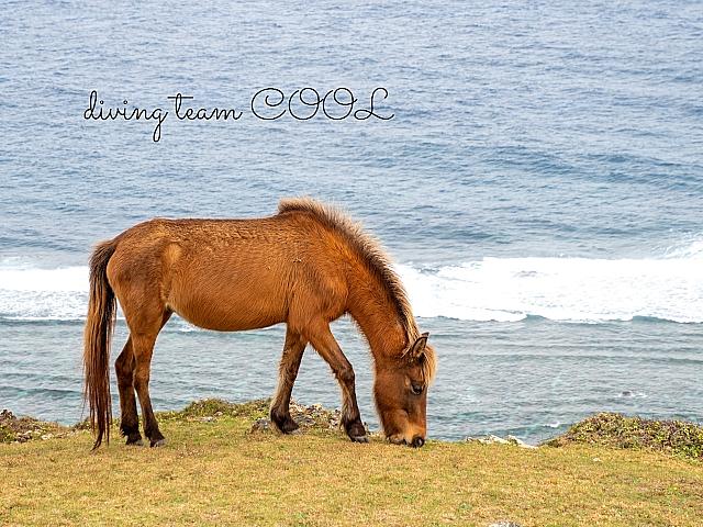 沖縄与那国馬