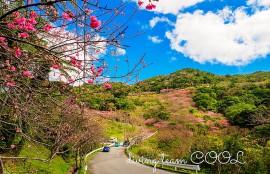 沖縄八重岳