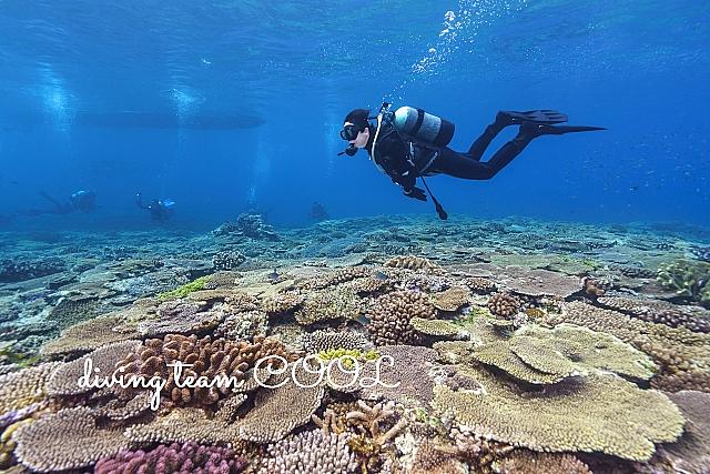 #珊瑚とダイバー