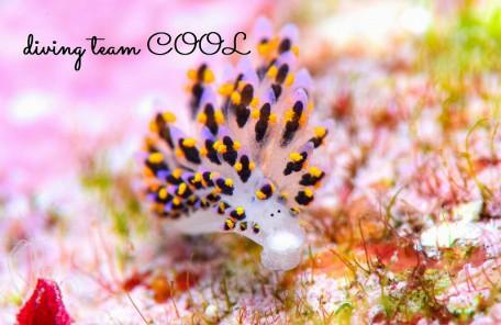 沖縄本島マクロダイブ ハナビモウミウシ