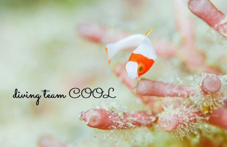 砂辺ビーチ イロブダイ幼魚